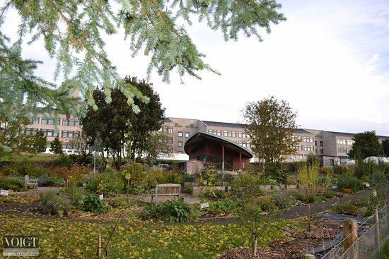 Ninewells Community Garden