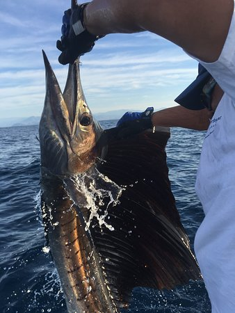Guerrero, Mexico: 10' Sailfish