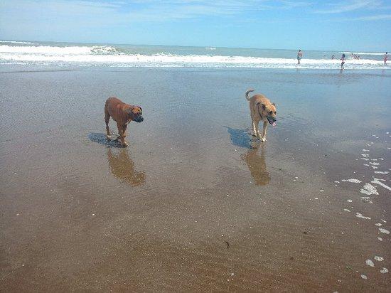 Claromeco - Playas: Playa con muchos perros, algunos callejeros puaj. No era asi