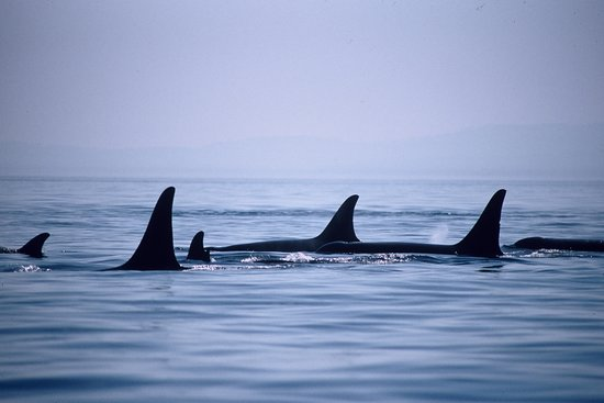 Orca Spirit Adventures (Victoria) - Updated 2019 - All You