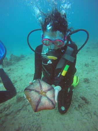 Oahu Diving: Starfish :0)