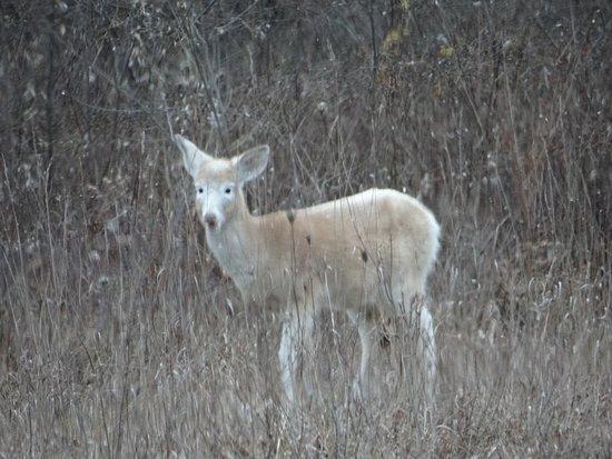 Deer Haven Park : Baby