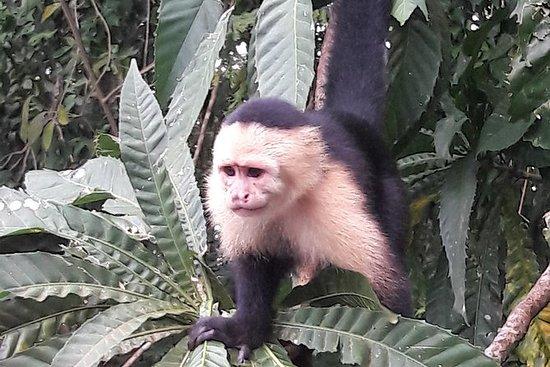 Visita a la Isla de los Monos y a un...