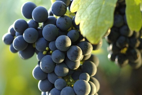 Napa-Sonoma Wine Private Tour - 8 hr...