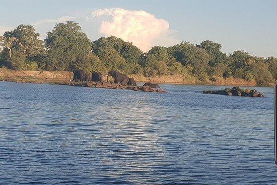 Chobe ganztägige Safari-Reise nach...