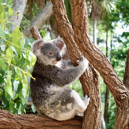 The Koala's were more than happy to pose for a photo.