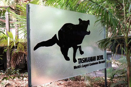 I Tassie Devil's were easy to see, even if they were having a sleep.