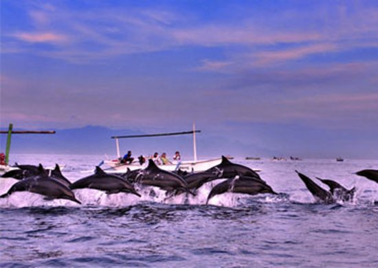 Ловина-Бич, Индонезия: Dolphin Lovinadriver.com in North Bali Indonesia