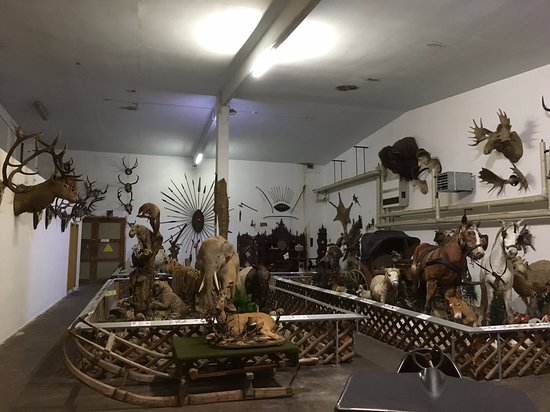 Tiermuseum Regenhütte