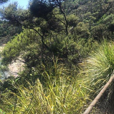 Matapouri Photo