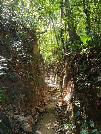 Penang National Park (Taman Negara Pulau Pinang) 사진