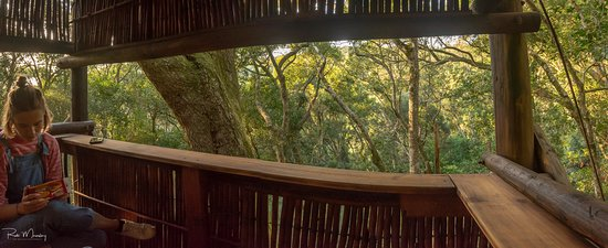 Grootvadersbosch Nature Reserve: View of the forest canopy from the northern bird hide.
