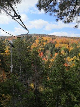 Bretton Woods Canopy Tour: Canopy Tour