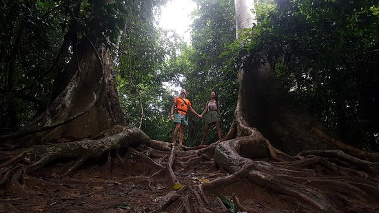 Tebing Guesthouse: proacházka džunglí Taman Negara je zážitek