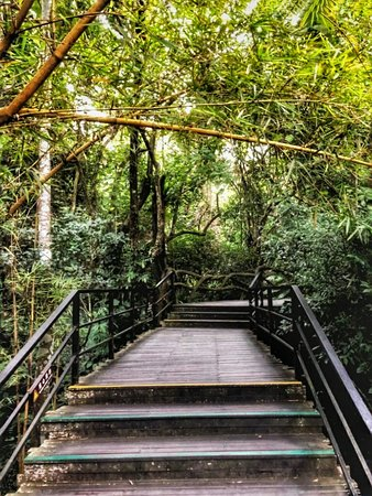 Yanuo Tropical Rain Forest Resort: Rainforest walk experience  in a cool climate