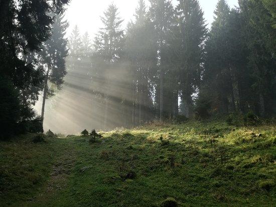 Tambre, Italy: Bosco Cansiglio la mattina 1