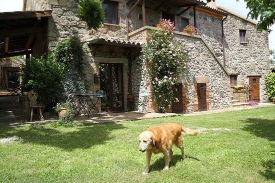 Civitella d'Agliano, Itália: Podere Porcino