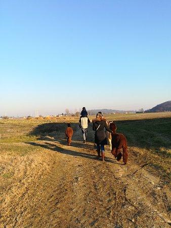 Monteviale, إيطاليا: A passeggio con gli alpaca
