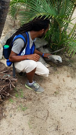 North Sound, Virgin Gorda: Gumption with a tortoise