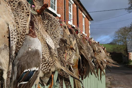 Pheasant, quail and mallard hanging from the fence at The Prince Leopold.