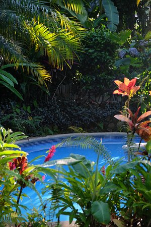 Playa Tortuga, Costa Rica: Enjoy the pool!