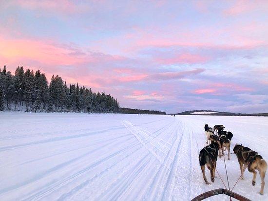 Lights Over Lapland: Dog sledding in Kiruna