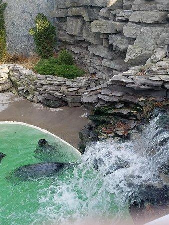 aquarium of niagara niagara falls 2019 all you need to know