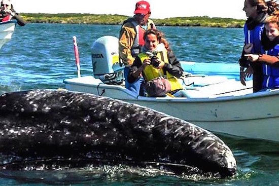 Gray Whale-Watching 2-Day Experience...