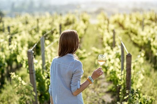 5 Hours Wineries, Tastings, Forest...