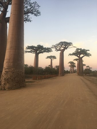 This picture is most interesting place and all the people who went to the west of Madagascar spend the sunset or the sunrise in this place. This is the Baobab avenue