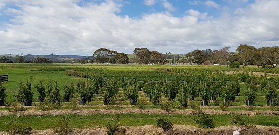Turners Beach, Australia: Vineyards & fruit trees