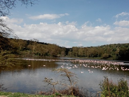 Rift Valley Province, Kenya: Lake Naivasha- an important hub for birds.