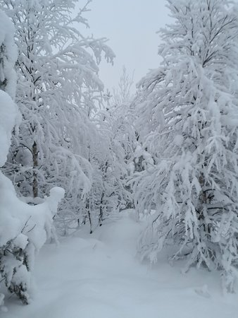 The Trail ahead.  How often can you get to experience this?   Dec 2018 Christmas in Levi (Lapland) Finland