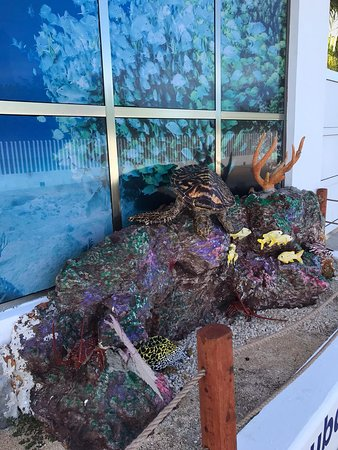 And artificial reef to show you just a representative about the amazing corals and wildflife animals you can see underwater.