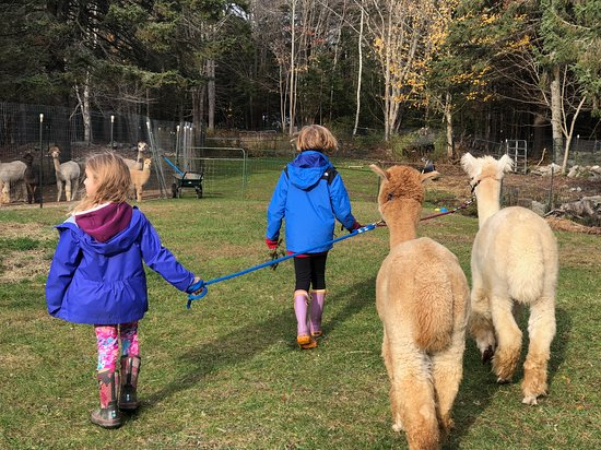Newagen, ME: Our young farm sitters training Dory and Dilly to trek!