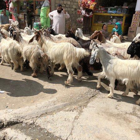 Saidu, Pakistan: Swat Serena Hotel