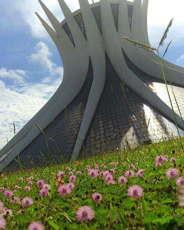Guia de Brasília Alberto