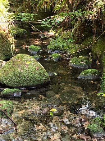 Morere Hot Springs: magci stream
