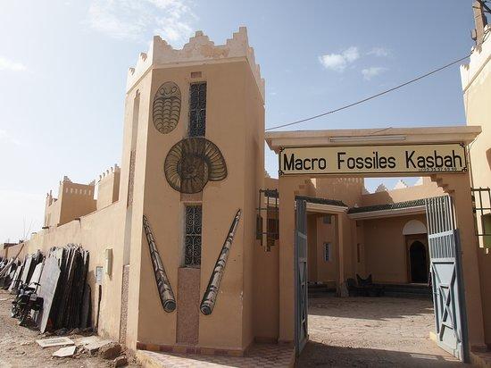 Macro Fossiles Kasbah