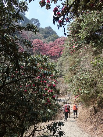 Ghorepani, Nepal: Trekkers during the trek
