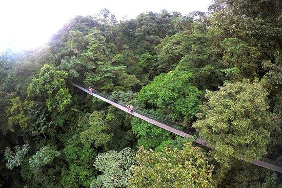 Mistico Park Hanging Bridges Guided...