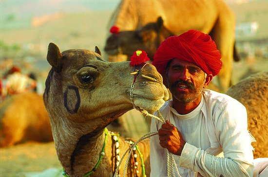 16-Days Rajasthan Tour with Agra from...