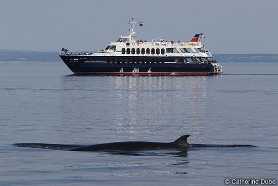 Croisière d'observation de baleines...