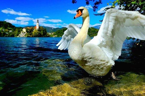 Großartiges Slowenien - Tagesausflug...