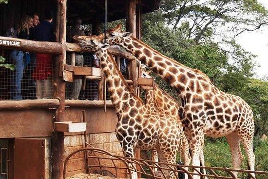 Karen Blixen Museum & Giraffe Centre...