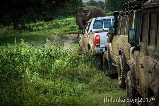 Minneriya National Park Elephant Watching Jeep Safari