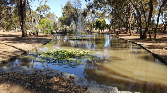 Wagin, Australia: Gardens behind ram