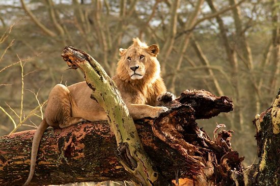 Muka Tours and Safaris