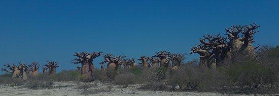 Madagascar Nirina Tours: Baobab