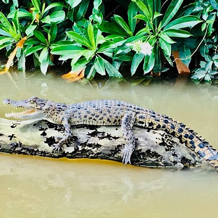 Uyo, Nigeria: crocodile watching  Join with us @sri_lankawithmadu